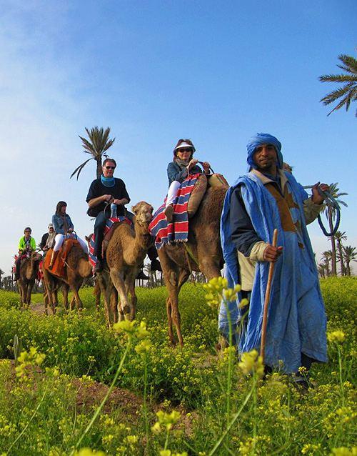dromadaire-palmeraie-marrakech