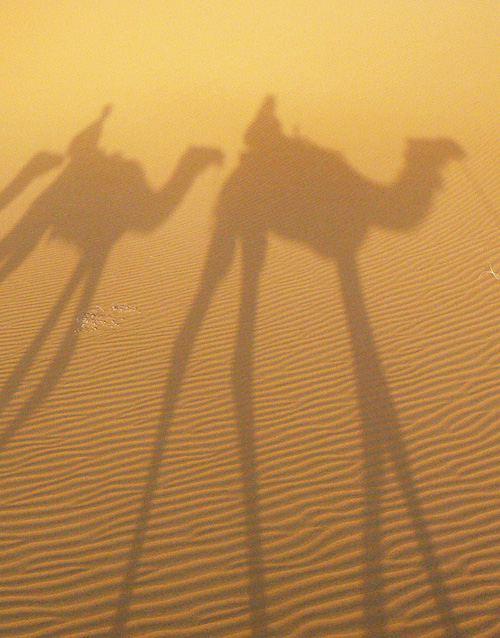 meharee-desert-dromadaire
