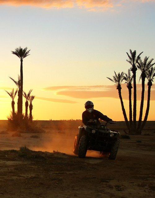 Quad-palmier-soleil-500x638